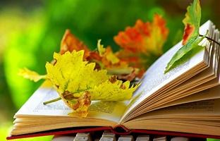 autumn_book_0